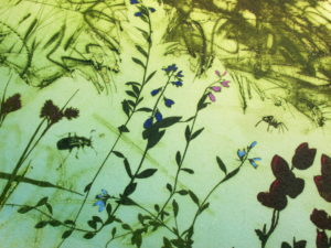 Photo etching, carborundum and drypoint. Magnificent Mires. Lynn Bailey